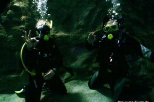 Dive4Life 23.11.19
